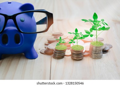 Blue piggy bank is placed on a wooden floor filled with coins. And growing trees, with the concept of saving and investing for financial security and education