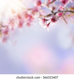 Blue and pink background with cherry blossoms framing the bright vibrant sky with sunshine. Spring nature flower background. Sakura, Japan.