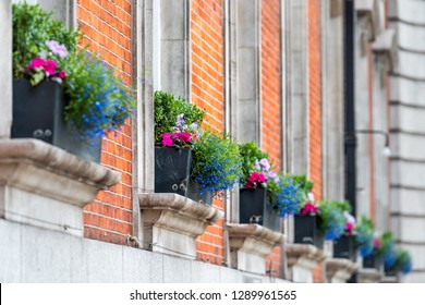 Blue and pink color flower basket box decoration on summer day with brick architecture in Chelsea, London UK row of windows