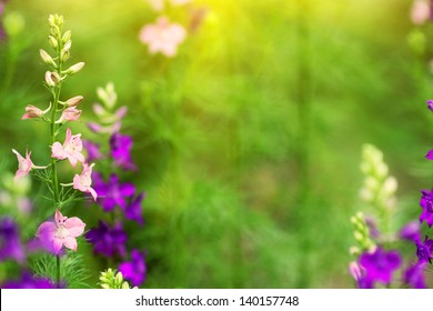 blue and pink delphinium flowers at sunset