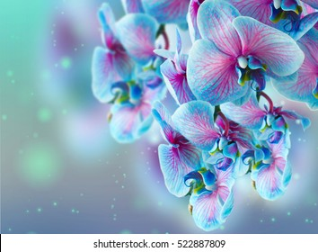 blue and pink orchid branch on bokeh background
