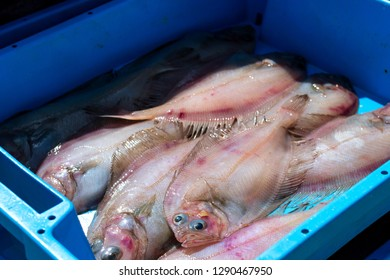 Blue plastic containers with catch of sea flatfish, ocean delicacies. Industrial catch of fresh fish. Fish auction for wholesalers and restaurants. Blanes, Spain, Costa Brava. Fishing in port Blanes