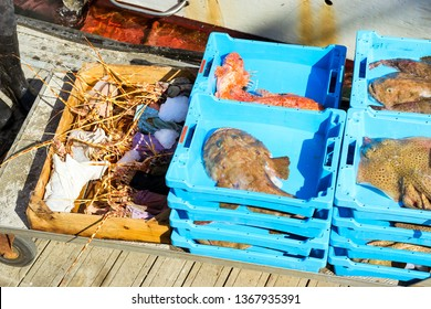 Blue plastic containers with catch of sea lobster, Electric Stingray, redfish and Monkfish, ocean delicacies. Industrial catch of fresh fish. Fish auction. Blanes, Spain, Costa Brava. Fishing in port