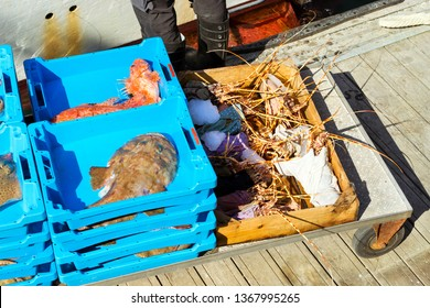 Blue plastic containers with catch of sea lobster, redfish and Monkfish, ocean delicacies. Industrial catch of fresh fish. Fish auction. Blanes, Spain, Costa Brava. Fishing in port