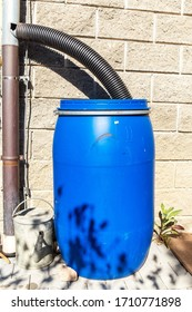Blue plastic rain water barrel. watering the garden. Water saving. Water supply for dry summer. Rainwater drainage.