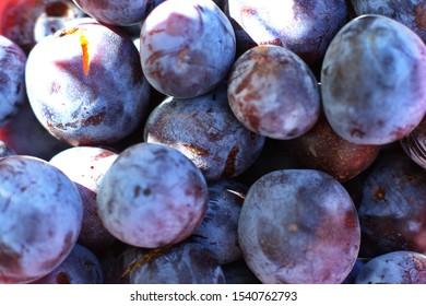Blue plum fruits. Ripe Plums Background - close-up. Selective focus.