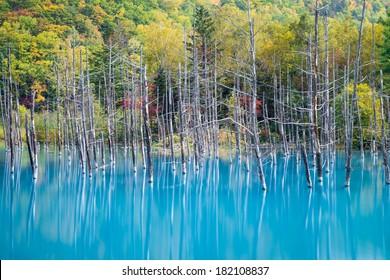 Blue pond (Aoiike) in Biei, Hokkaido