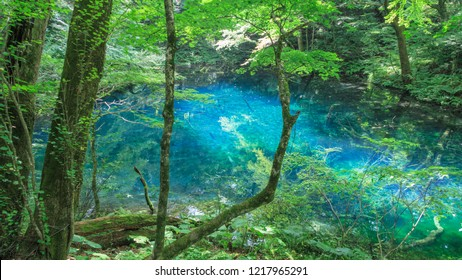 Blue pond, Aoike, Shirakami-Sanchi, world Heritage, Aomori, Japan