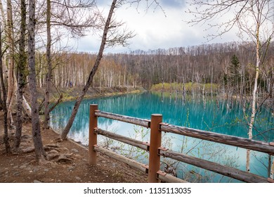 Blue pond (japanese call Aoi Ike)It is a peaceful blue pool that occurs naturally.It is located in Biei, Hokkaido.Japan