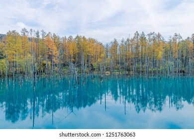 Blue Pond is a man-made pond feature in Biei, Hokkaido, Japan.  The colour is thought to result from the accidental presence of colloidal aluminium hydroxide in the water.