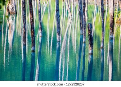 Blue Pond is a man-made water feature in Biei, Hokkaido, Japan.