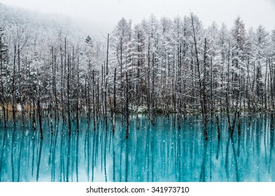 Blue Pond is a man-made water feature in Biei, Hokkaido, Japan. It is one of the world most beautiful pond and offer different view for each season. The pond opened at 2010 and become tourism hotspot.