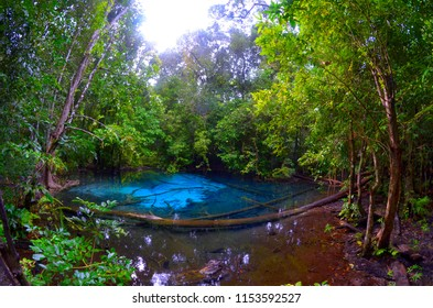 Blue Pool in the Sa Morakot area, in the Khao Nor Chuchi forest