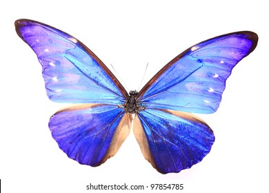 Blue Purple butterfly on a lonely and isolated  white background