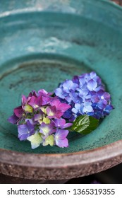 Blue and purple hydrangea flower heads floating on water ina turquoise, ceramic bowl.