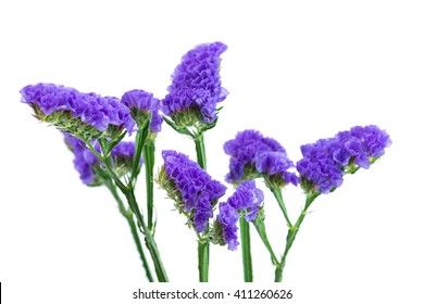 Statice flower images stock photos vectors shutterstock blue purple statice isolated on white background shallow depth of field mightylinksfo