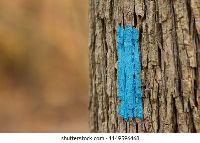 Blue rectangle painted trail marker on bark of tree directs hikers to stay on correct path