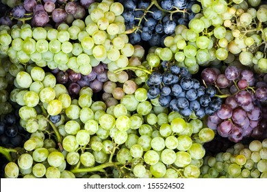 Blue red and green grapes