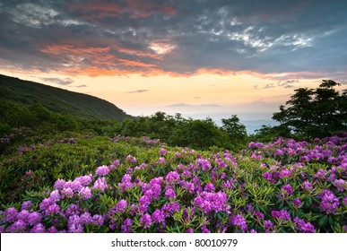 Blue Ridge Parkway Mountains Sunset over Spring Rhododendron Flowers Blooms scenic Appalachians near Asheville, NC