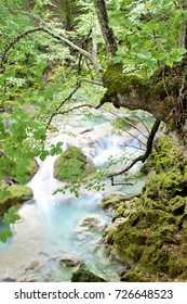 the blue river, Beech forest in summer,Natural Park Urbasa, Urederra River, Navarra, spain, peace, calm, serenity, harmony, fullness, well-being, nature, natural, contemplate, meditate, breathe, grow,
