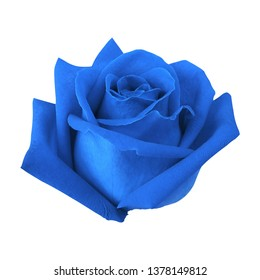 Blue rose bud isolated on white background with clipping path.