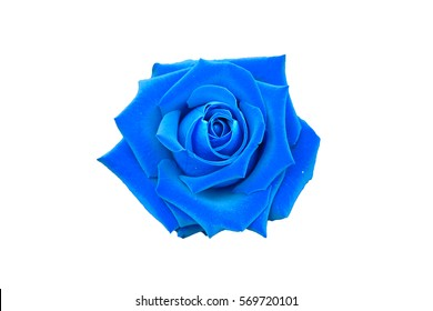 blue rose isolated on white