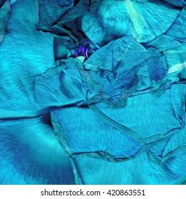 Blue rose macro leaves