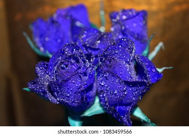 blue roses with waterdrops on it