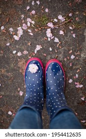Blue rubber boots with white dots and puddle with pink sacura petals. Spring season, rainwater with flowers