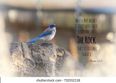 Blue Scrub Jay Bird perched on a rock with a bible verse from Psalm