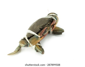 Blue sea crab bind on white background