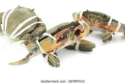 Blue sea crab bind on white background