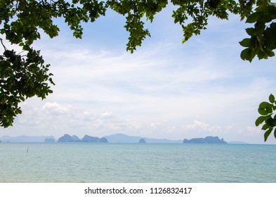 blue sea and leaves foreground