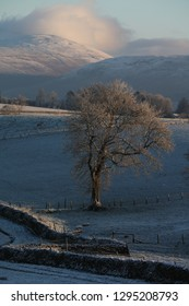 Blue shadows and snowy hills, lone tree in field,Yorkshire Dales