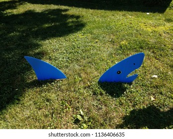 blue shark on green grass