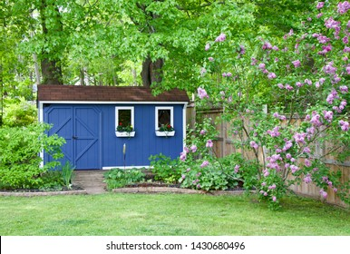 Blue she shed and lilac bush in the backyard