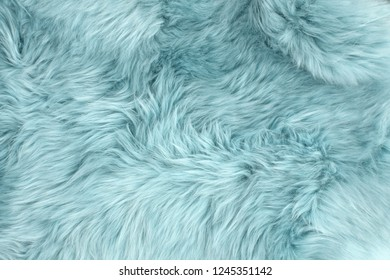 Blue sheep fur. Natural sheepskin rug background. Wool texture