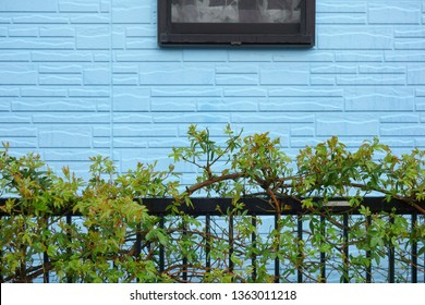 Blue siding outer wall and fence plant