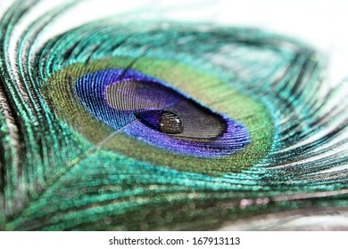 A blue and silver water drop floating on a peacock feather