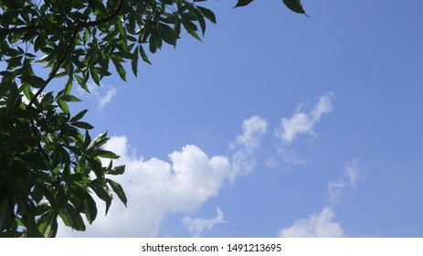 blue skies with a tree in view