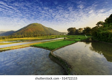 blue sky and agricultural land with a view of the mountains,,Balige North sumatra indonesia