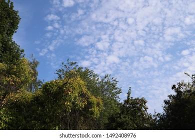 Blue sky with alto cumulus clouds and leafy treeline