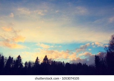 Blue sky background with beautiful bright clouds.Trees in forest.Winter scenery.Treetops.