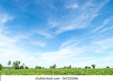 Blue sky and beautiful cloud with meadow tree. Plain landscape background for summer poster.