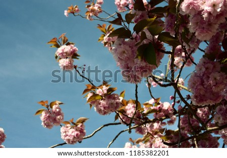 Blue Sky Between Spring Flowers England Stock Photo Edit Now