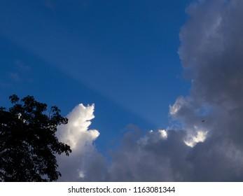 Blue Sky with bird con tree