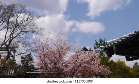 Blue sky and the blooming sakura