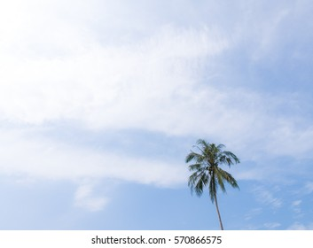 blue sky with cloud and coconut tree
