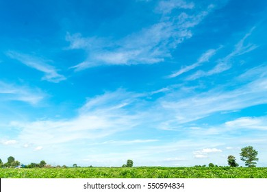 Blue sky and cloud with meadow tree. Plain landscape background for summer poster.