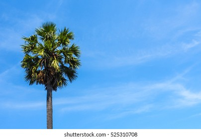 Blue Sky with Clouds in the background with single palm tree in a frame : SO BLUE concept.